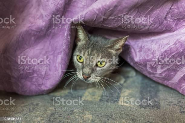 Gray cat hiding under bed cover picture id1048494454?b=1&k=6&m=1048494454&s=612x612&h=q3owqzfzjmqae0ktwjgrvgygmcwqi1nxo xj7foe xk=