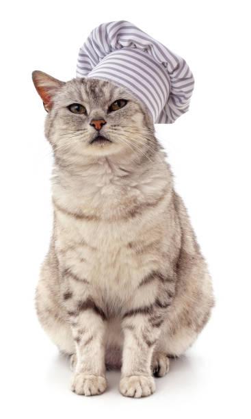 Gray cat in a chefs hat picture id1248262441?b=1&k=6&m=1248262441&s=612x612&w=0&h=jxuuochoonwtszvswacjkidf jy jgcph0sj7ao2fte=