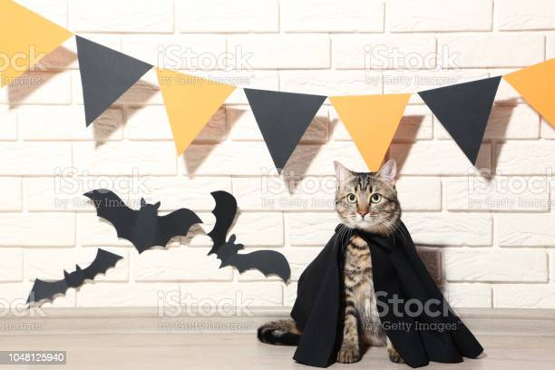 Gray cat in black cloak with paper bats on brick wall background picture id1048125940?b=1&k=6&m=1048125940&s=612x612&h=7ldcf3ydzumc6oyorssuwwzbfefaowy2garpkwst7oq=