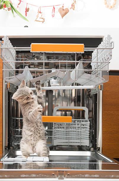 Gray cat in dishwasher picture id180830753?b=1&k=6&m=180830753&s=612x612&w=0&h=hopftxmagxlzwzjln5ne0k9o ptrnu rgmivzhba65i=