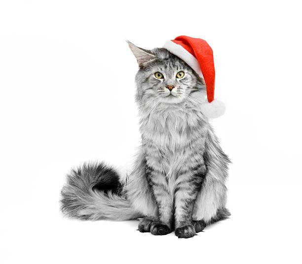 graue katze in santa-anzug - katze weihnachten stock-fotos und bilder