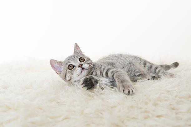 Gray cat picture id170094791?b=1&k=6&m=170094791&s=612x612&w=0&h=uxcpiqq3i j2g8dr6ql0hqrd0jnzsd8iyhex utqzyg=