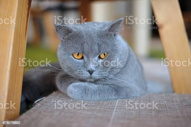 Gray cat picture id676078850?b=1&k=6&m=676078850&s=612x612&h=jyzofecd8okmpr5pwiztygt6ds5ljonkrgaa833sc0k=