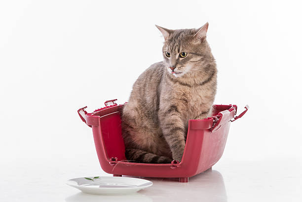 Gray Cat Sitting on the Box and Looking. stock photo