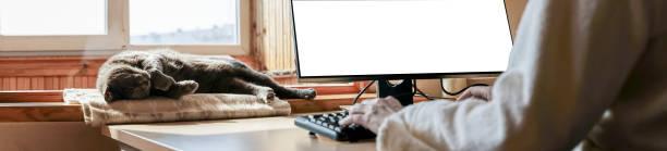 Gray cat sleeping blissfully on window sill near desk with it at picture id1213738587?b=1&k=6&m=1213738587&s=612x612&w=0&h=bw6gi4n wnv08ajg9w rimzyrh23bm0gs7duxrgbvvs=