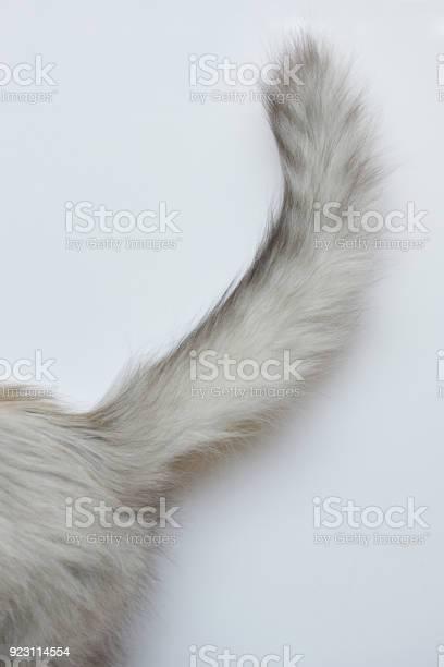 Gray cat tail picture id923114554?b=1&k=6&m=923114554&s=612x612&h=ldf1sspqqxgp9po6ypjhhdk3ajpkwhp2witifc9kpk0=