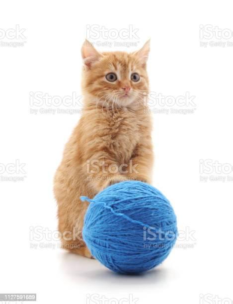 Gray cat with a ball picture id1127591689?b=1&k=6&m=1127591689&s=612x612&h=weyebc1kocdvxz1kmrtfywa xddlq fuiwyim7ozlwe=