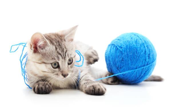 Gray cat with a ball picture id1201254659?b=1&k=6&m=1201254659&s=612x612&w=0&h=odhpkldbhy1qbasgtv9b r663 shuywzagjnhk tyls=