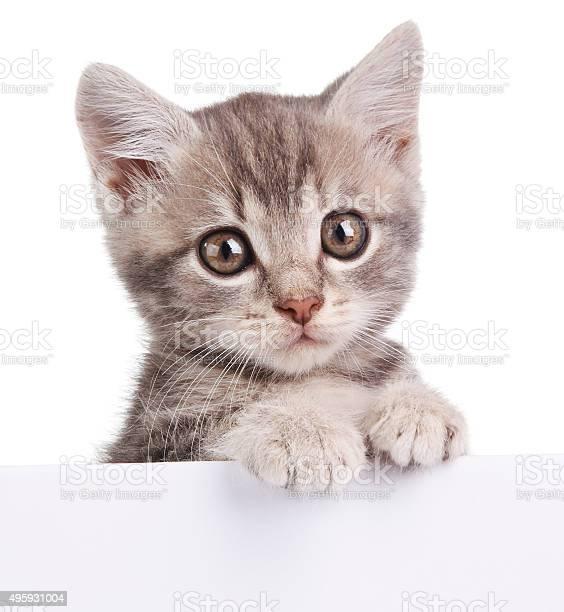 Gray cat with white board picture id495931004?b=1&k=6&m=495931004&s=612x612&h=fjsqamacmzjutbvuw guxrirtl0 5arjvsn4k2fjlge=
