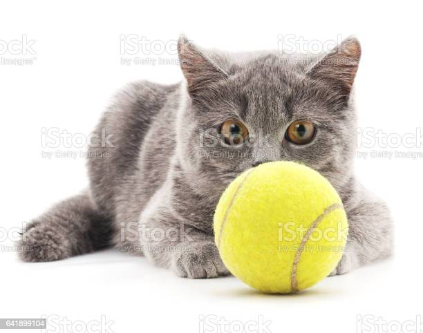 Gray cat with yellow balls picture id641899104?b=1&k=6&m=641899104&s=612x612&h=eqhimva5dpzoonzvx3w2wat9h8holuoecpeoher1 qu=