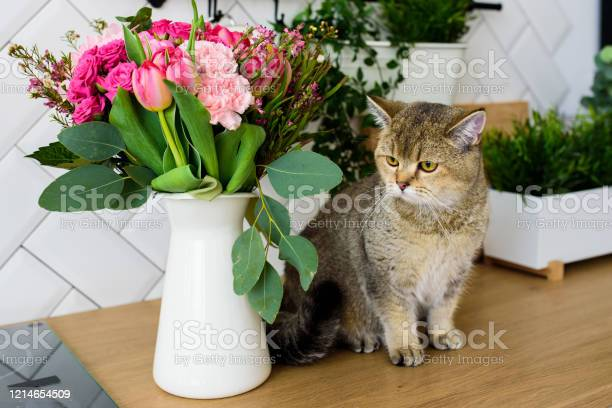 Gray chinchilla cat breed next to a bouquet of flowers in a modern picture id1214654509?b=1&k=6&m=1214654509&s=612x612&h=f3t0pkr2j1kekkmyy4r 8pbfwbh2fth7mh5cqhz  4k=