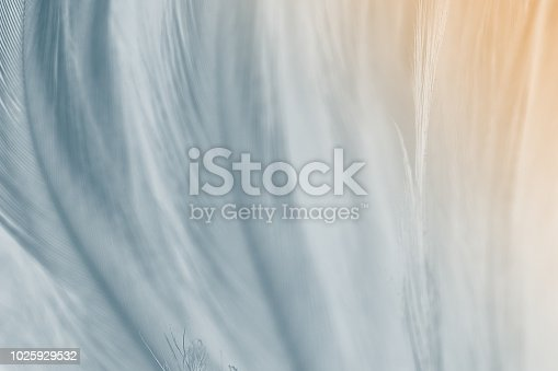 istock gray color trends chicken feather texture background,Light orange 1025929532
