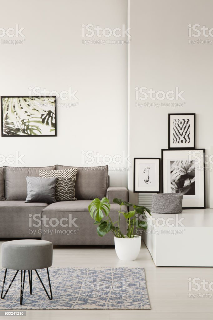 Gray couch with pillows behind a stool on blue carpet in bright living room interior with botanic posters and monstera plant. Real photo stock photo