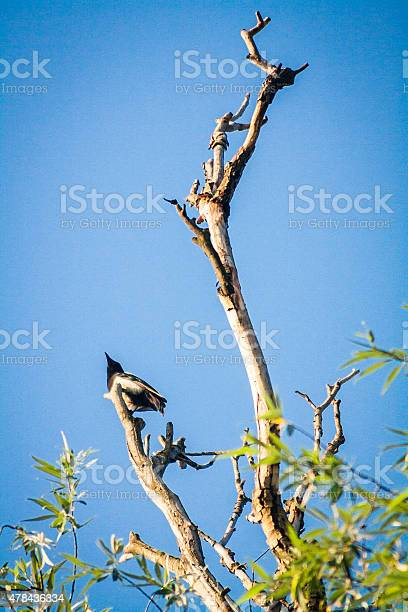 Photo of Gray crow on a bare tree top