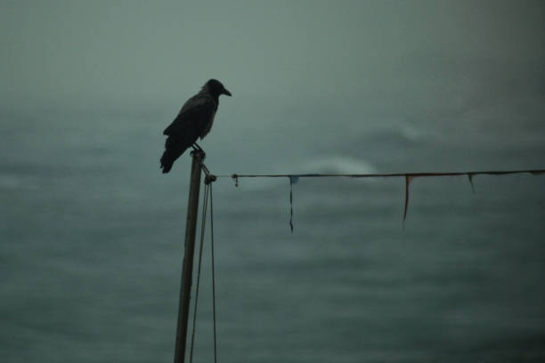 a gray crow on a wire on a stormy day in jaffa - croak stock pictures, royalty-free photos & images