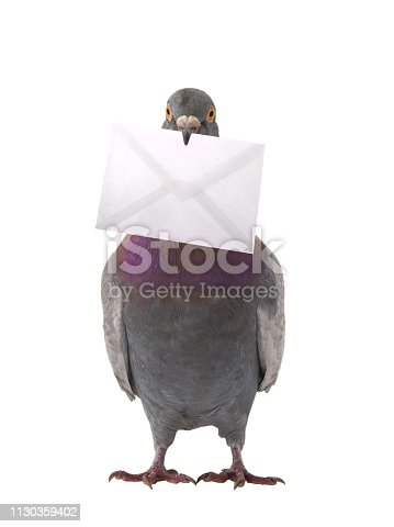 gray dove with envelope isolated on white background