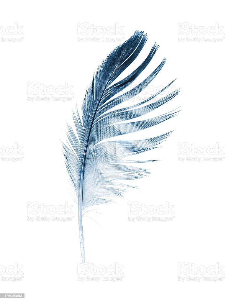 Gray feather isolated on white background stock photo