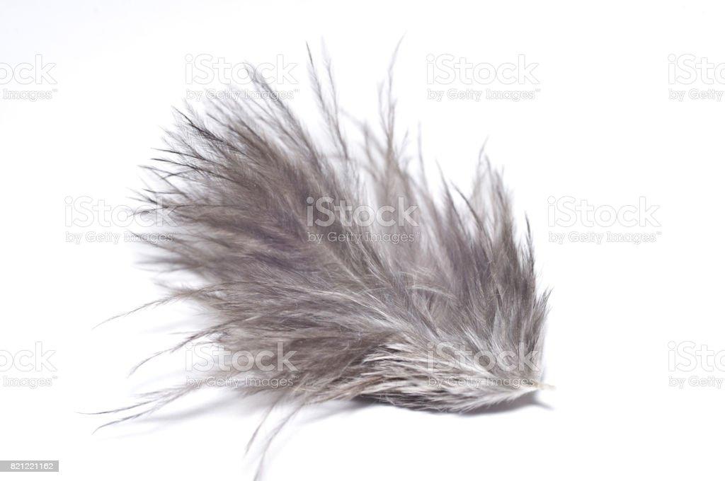 Gray feather isolated white background. Macro stock photo