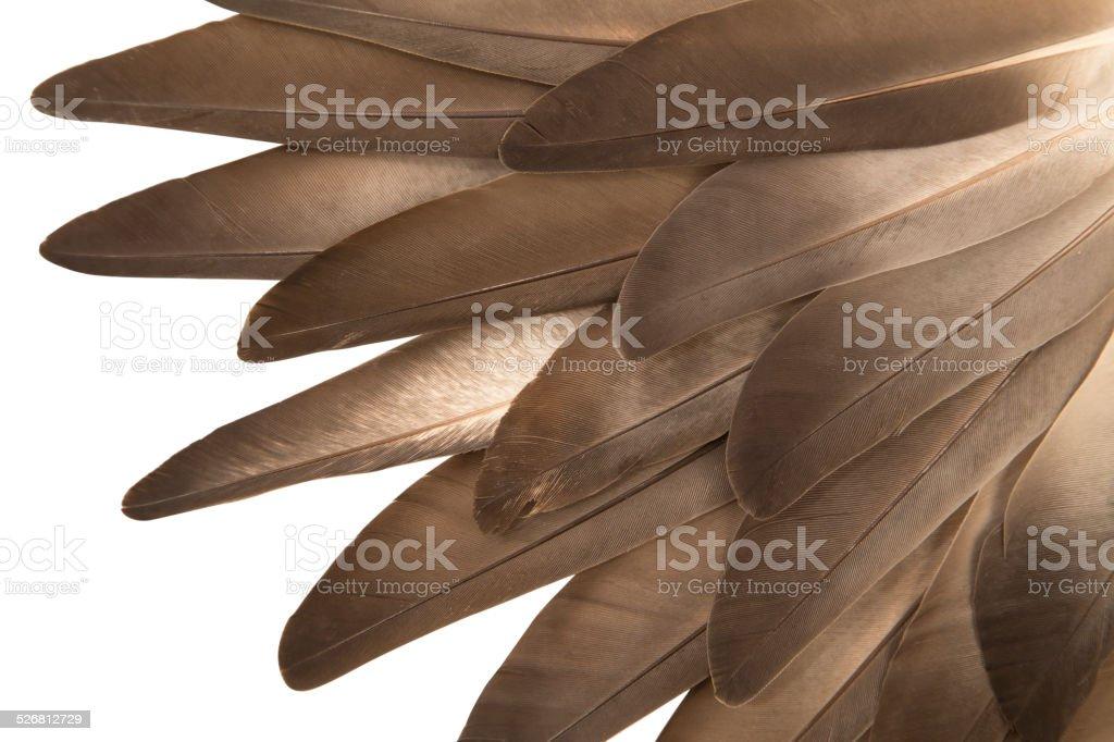 Gray feathers stock photo