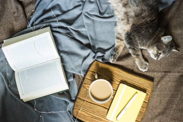 Gray fluffy pet cat on a blanket next to a cup of coffee and a book picture id996754854?b=1&k=6&m=996754854&s=612x612&w=0&h=5tbjnz7dsotipw1dfg7z3uriui4xov41hldmjyxuinc=