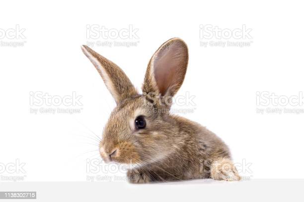 Gray fluffy rabbit looking at the signboard isolated on white picture id1138302715?b=1&k=6&m=1138302715&s=612x612&h=dz cnkoc3c5ngbowjd2i2l9mzmhyzixillcdpxyy69w=