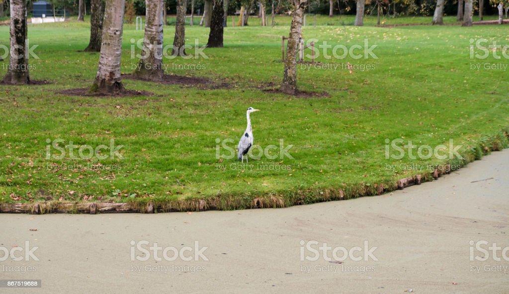 Gray heron in public park in Rotterdam stock photo