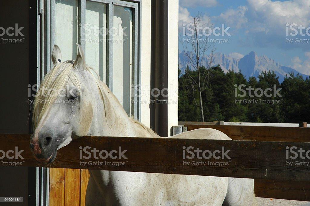 Gray Horse Alpine Background stock photo