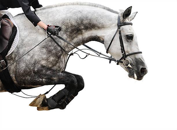 Gray Pferd springen isoliert in show – Foto