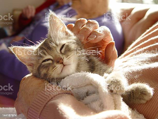 Gray kitten enjoying runs from human picture id144187974?b=1&k=6&m=144187974&s=612x612&h=mni w 0jctledntrdq1ehb7gvujjuuw twtgttspkoi=
