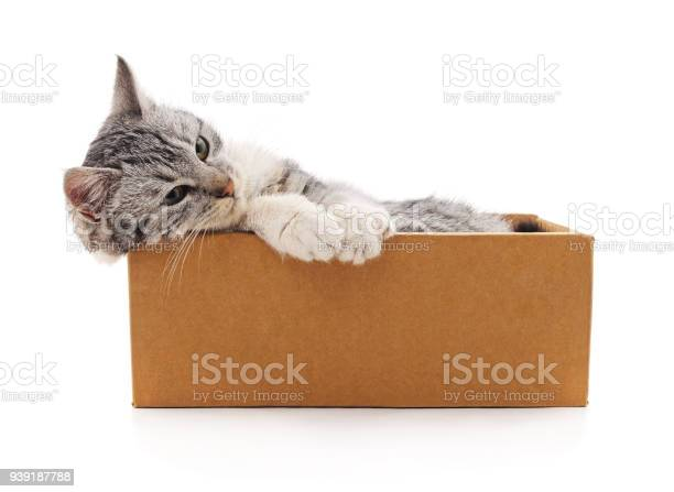 Gray kitten in a box picture id939187788?b=1&k=6&m=939187788&s=612x612&h=ng9dek9zit4qizxvpulg1rytiwpydyl29amcfpru6qc=
