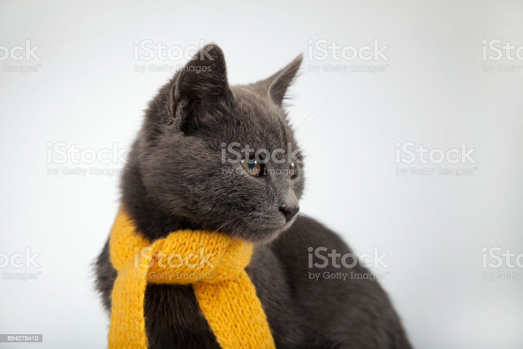 gray kitten in a yellow scarf on a white background, stock photo