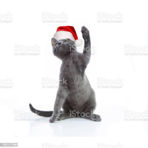 Gray kitten in red cap 3 picture id1002217596?b=1&k=6&m=1002217596&s=612x612&h=whhfwkawpghwzd99iykwy3soy2ghwictbwawxbqyzo4=
