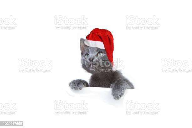 Gray kitten in red cap 6 picture id1002217658?b=1&k=6&m=1002217658&s=612x612&h=anwjk lvr8ekidgozsnkchyukhlxn6i6s6tkszg2xe4=