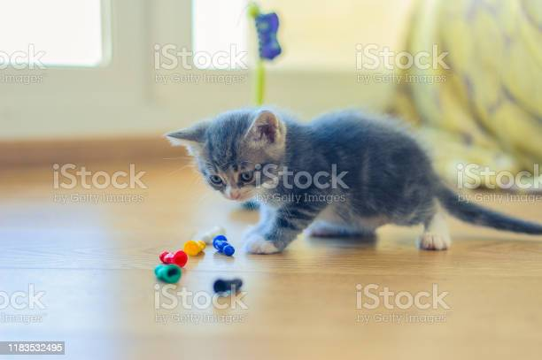 Gray kitten is played with colorful figures on the floor picture id1183532495?b=1&k=6&m=1183532495&s=612x612&h=hjkosvanpk3vmjrck3c8ftm4q6irrn8zlp lpwvbg08=