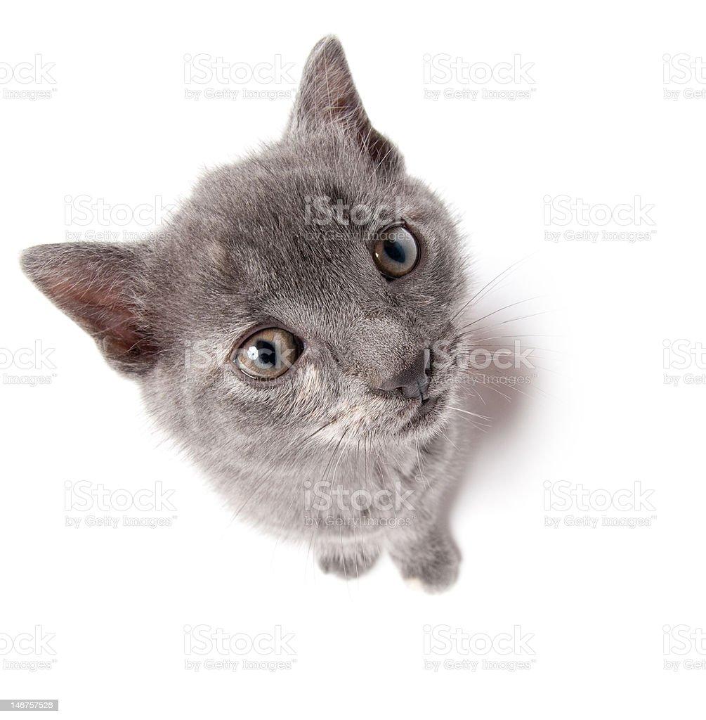 Gray kitten looking up stock photo
