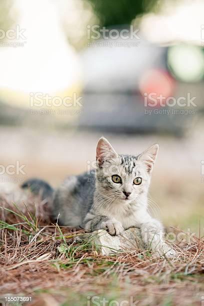 Gray kitten picture id155073691?b=1&k=6&m=155073691&s=612x612&h=qlzbzmrfoirkopjxw wdr5ltduogedhpd5rjytxwq9c=