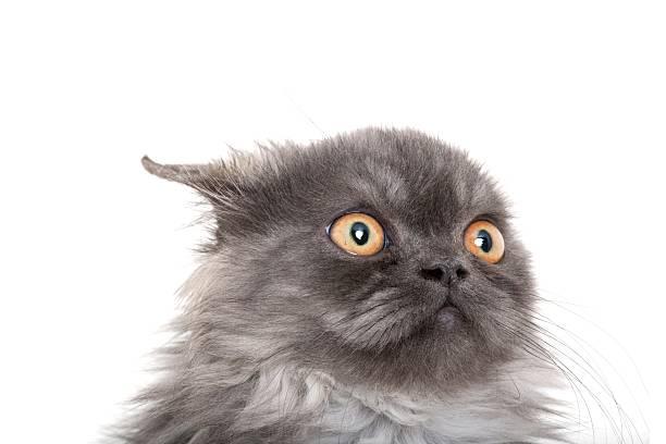 Gray kitten picture id183037920?b=1&k=6&m=183037920&s=612x612&w=0&h=qjz8u5qgqzfajqdxrjvozv xg40yt ylvxoejyk3ive=