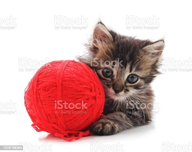 Gray kitten with a ball picture id1029758380?b=1&k=6&m=1029758380&s=612x612&h=riwbafq mhzqae9ogdrgi0nqmubobfflsjhlyszwmpq=
