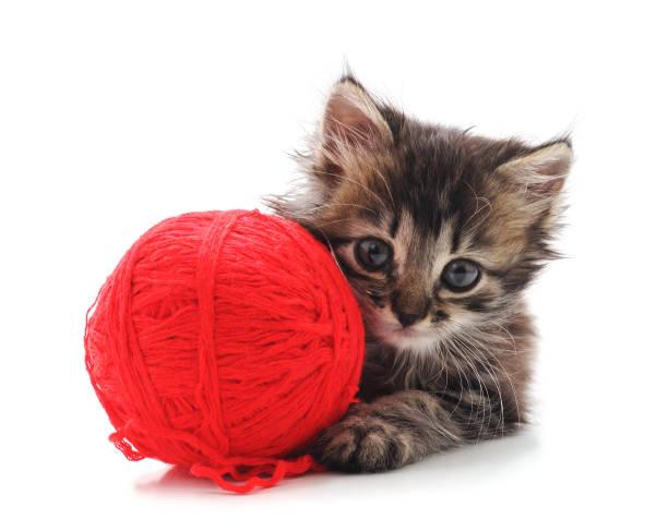 Gray kitten with a ball picture id1029758380?b=1&k=6&m=1029758380&s=612x612&w=0&h=snygrzsbsmcitud0h5lkdkgwuebhxjofjnn3z4vhrek=