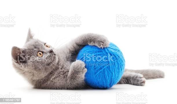 Gray kitten with a ball picture id1165461797?b=1&k=6&m=1165461797&s=612x612&h=jmhg8hdbzmlx01ydnsj jud ie3e7fvnfpxtzgflayw=