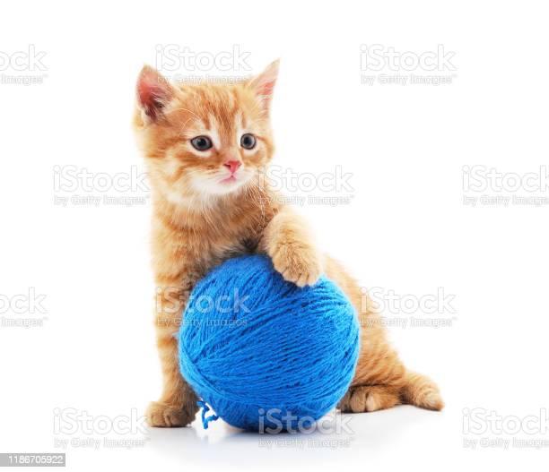 Gray kitten with a ball picture id1186705922?b=1&k=6&m=1186705922&s=612x612&h=pcsmticnpuufjqohqxods948aneb0cvpvlsc5p wjn4=