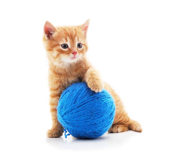 Gray kitten with a ball picture id1186705922?b=1&k=6&m=1186705922&s=612x612&w=0&h=cijta nxiffeplxrel3pwuirozyqiqmxgaf yckrz s=