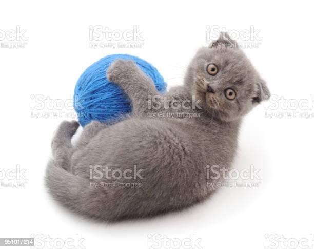 Gray kitten with a ball picture id951017214?b=1&k=6&m=951017214&s=612x612&h=zbeqilvj7q3rcjqqiufzhbr3ckjptnexv0rg6 x9fvo=