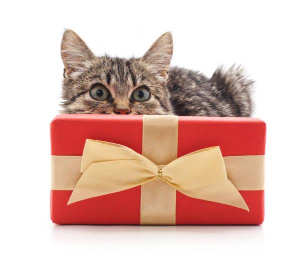 Gray kitten with a gift picture id1086246312?b=1&k=6&m=1086246312&s=612x612&w=0&h=6qqpr9s4xj3bhcmqchna18u1k34lh7x5jbc4vz1jokk=