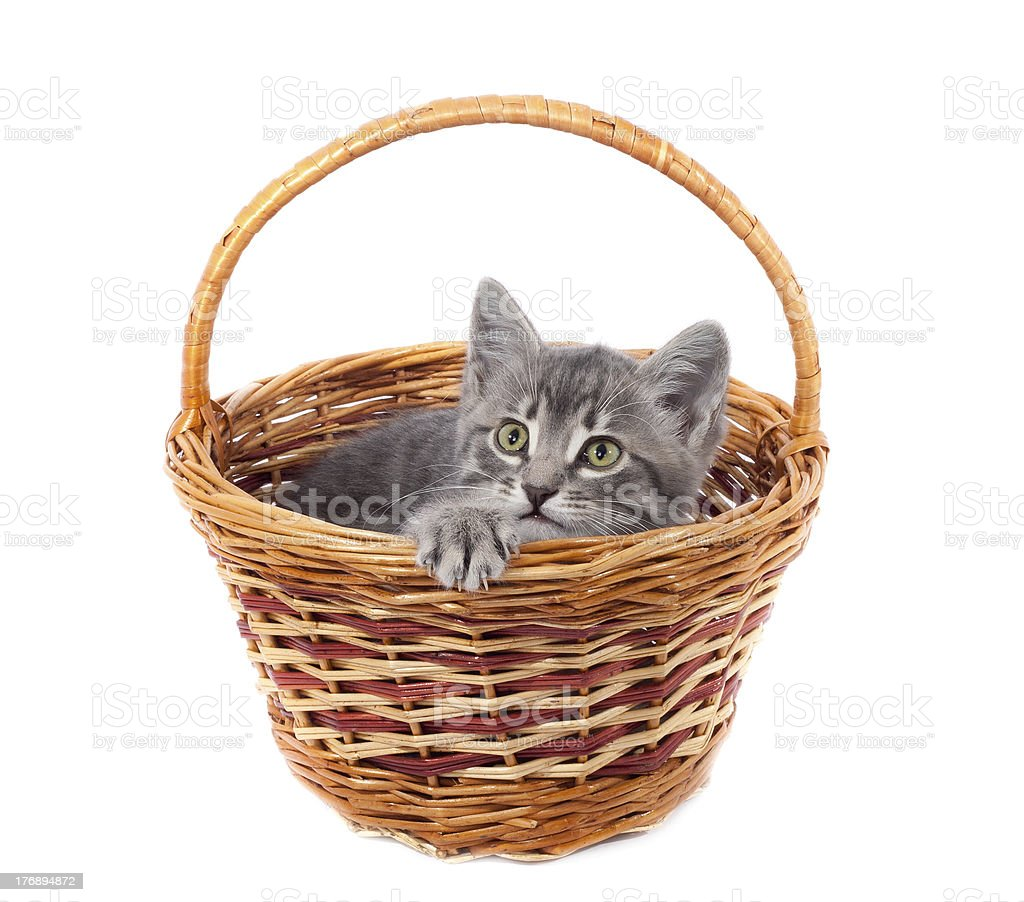 Gray kitty in a basket royalty-free stock photo