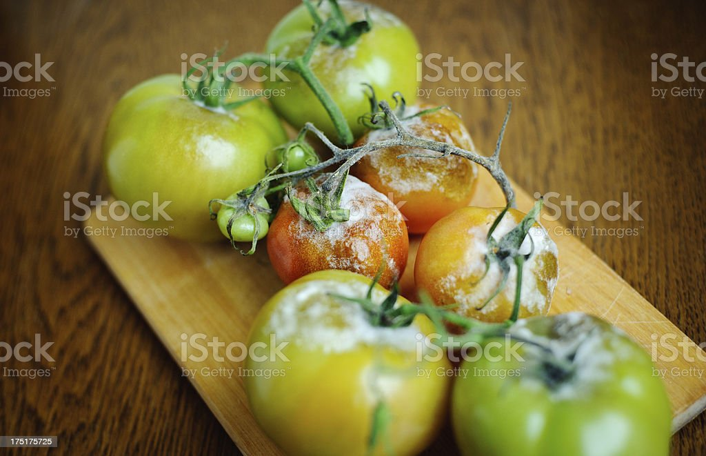 Gray Mold disease - Botrytis cinerea stock photo