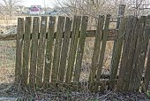 istock gray old broken fence from wooden boards in the wall overgrown with dry vegetation 1215472067
