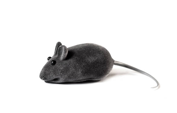 Gray pet toy mouse isolated on white background picture id1200780601?b=1&k=6&m=1200780601&s=612x612&w=0&h=341uk3uuaoiueky2ga1rhr8lobrhlaq2s73lxsms4vq=