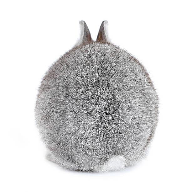 Gris fourrure de lapin bunny Bébé de vue de l'arrière - Photo