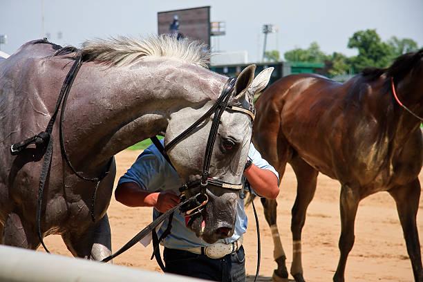 Gray Racehorse
